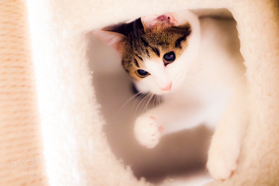 Photograph Baby Face by Seiji Mamiya on 500px