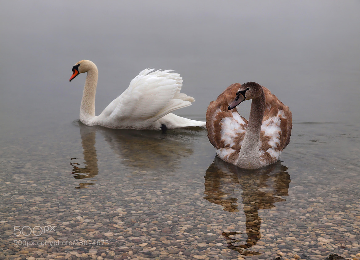 Photograph PAIRS by Mirna Vidić on 500px