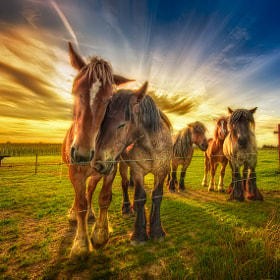 Equine Friendship by Iván Maigua (imaigua)) on 500px.com