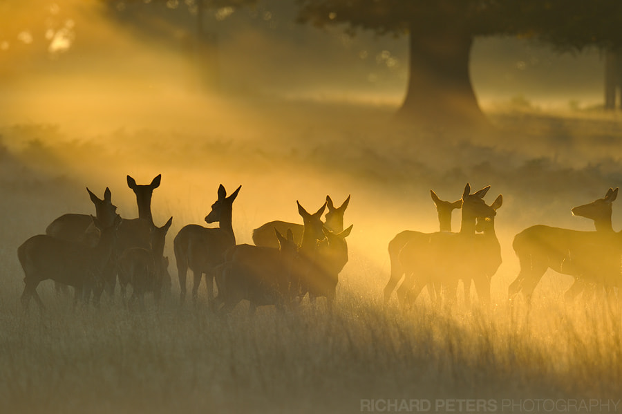 Photograph First Rays of Light by Richard Peters on 500px