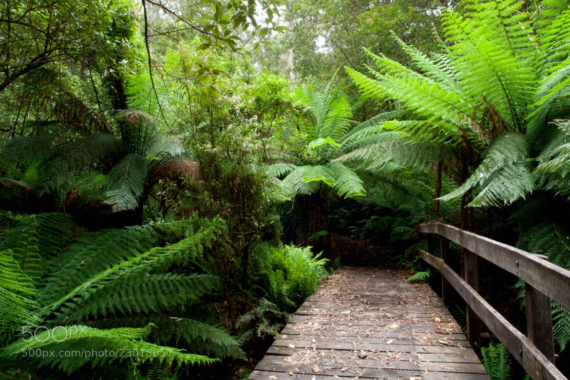 Photograph Bridge to the Ferns by John Sharp on 500px