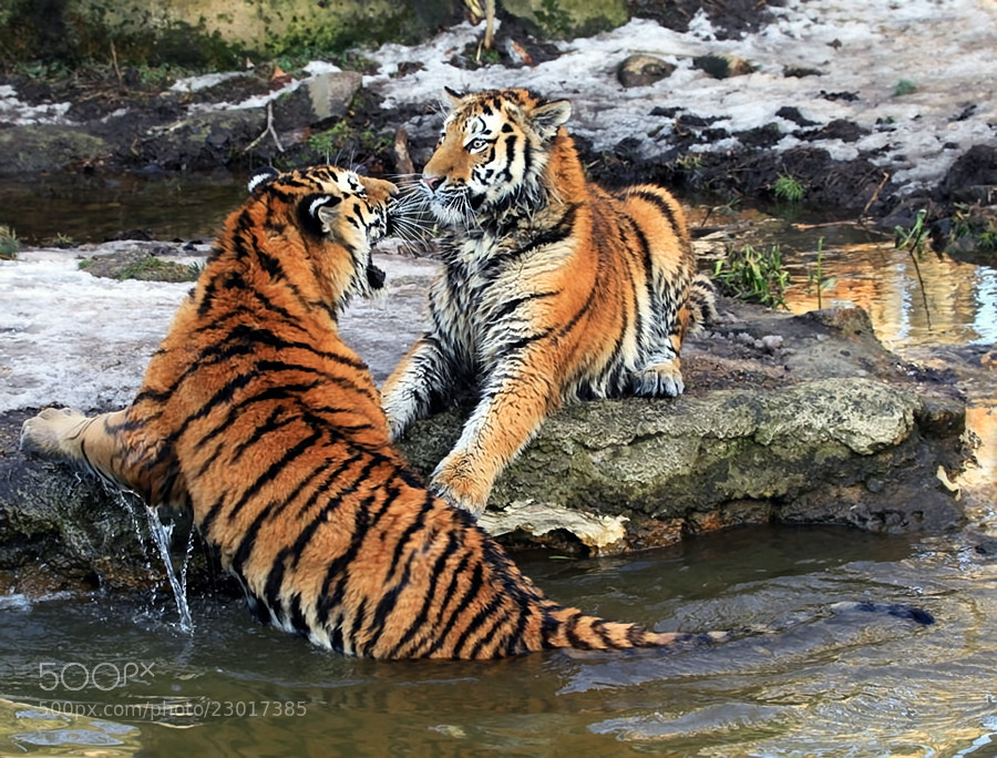 Photograph Two brothers by Klaus Wiese on 500px