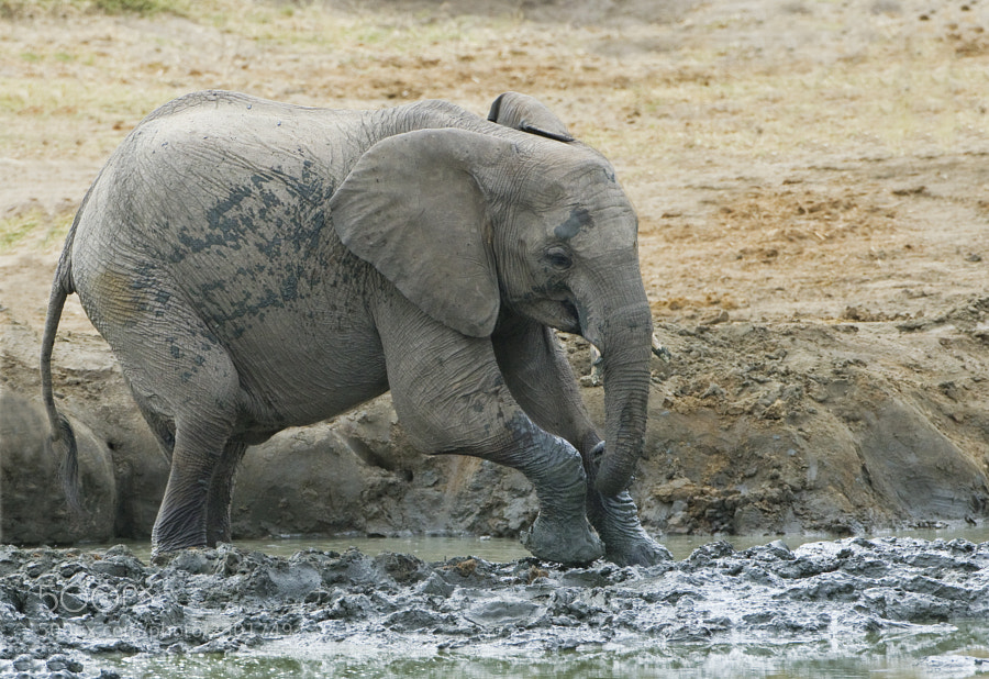 Taken at Kennedy 2 waterhole, Hwange NP, Zimbabwe, 30th June 2010
