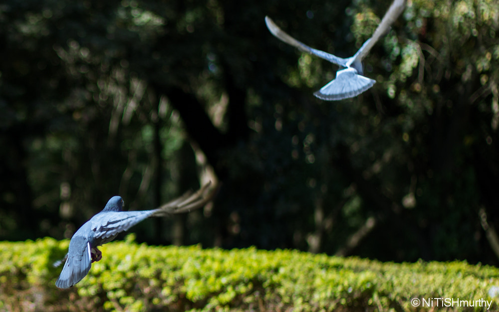 Photograph Bird Chase by Nitish Murthy on 500px