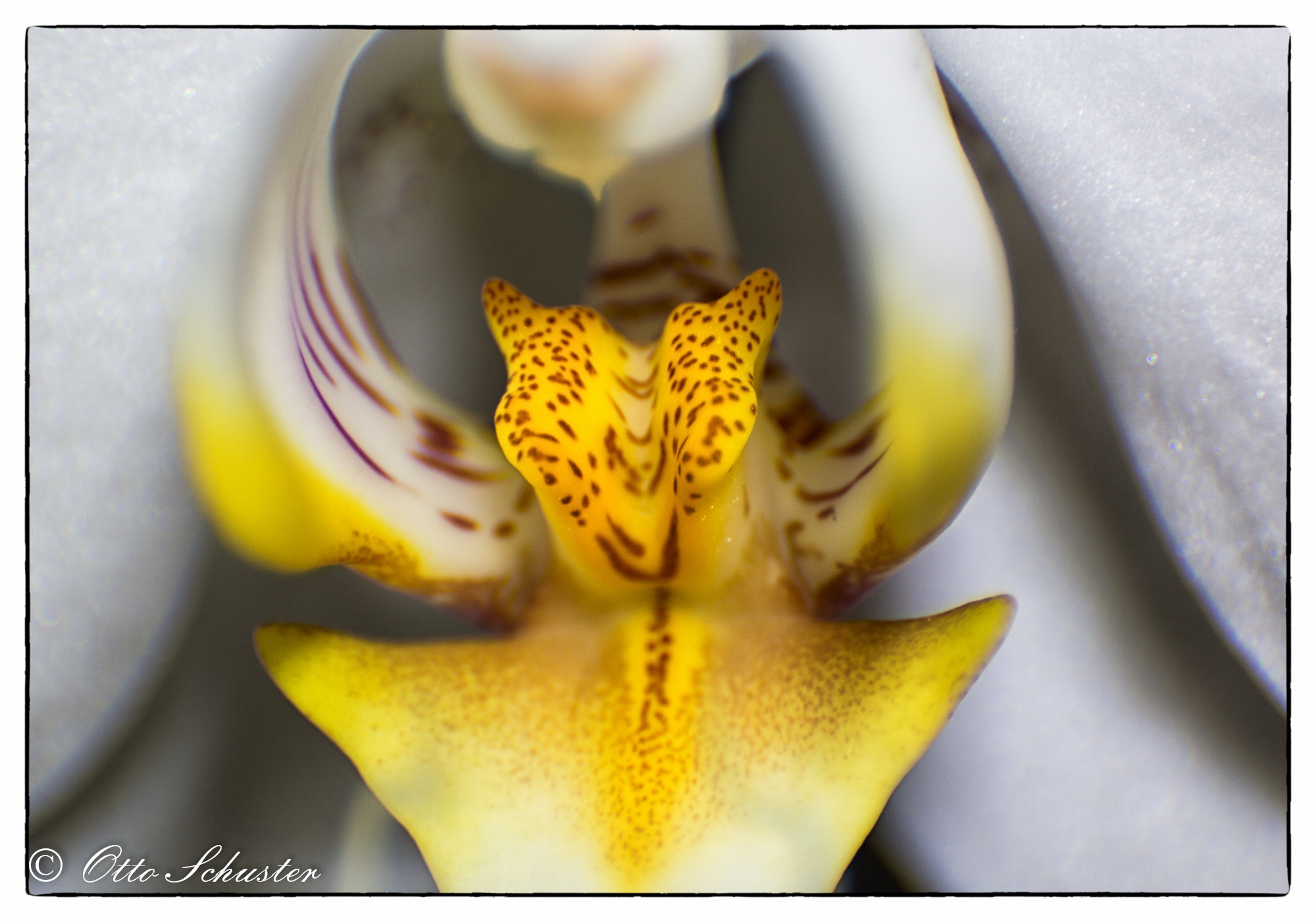Photograph Orchid by Otto Schuster on 500px