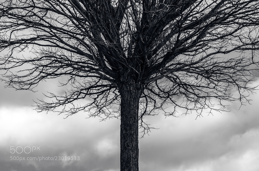 Photograph Symmetree by Sim On on 500px