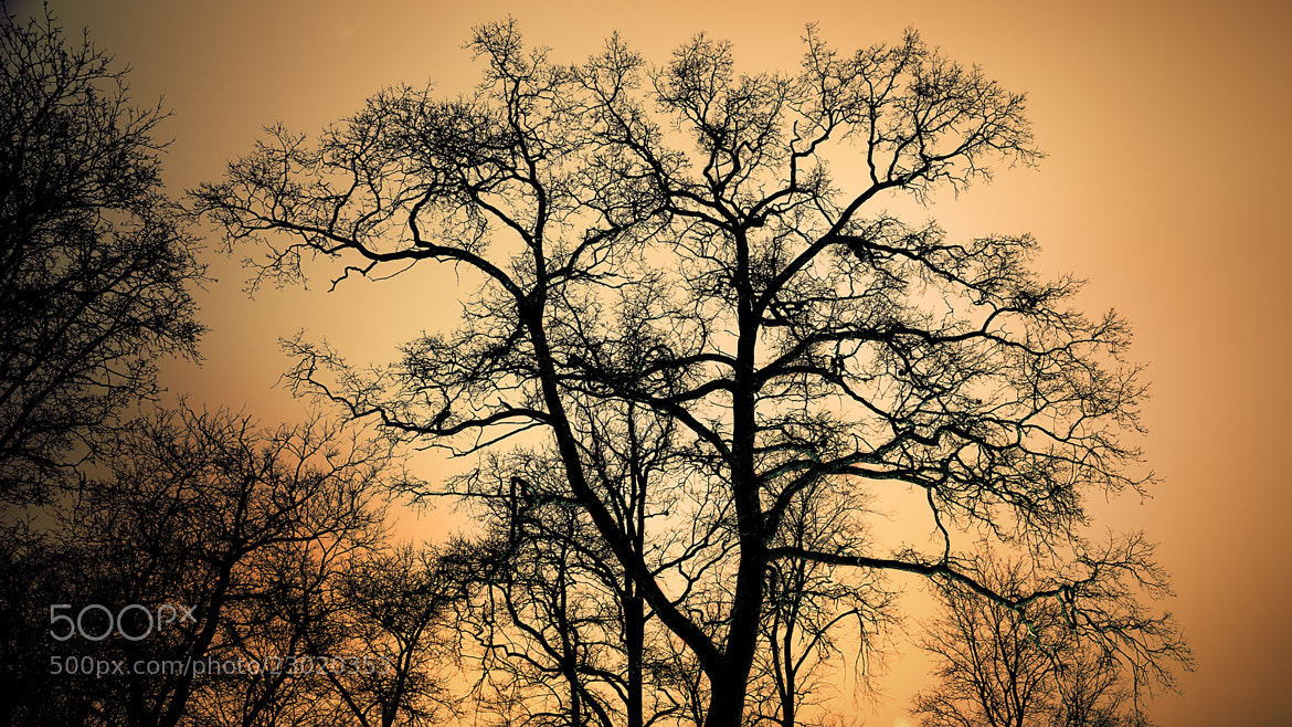 Photograph A tree by Adam Wikman on 500px