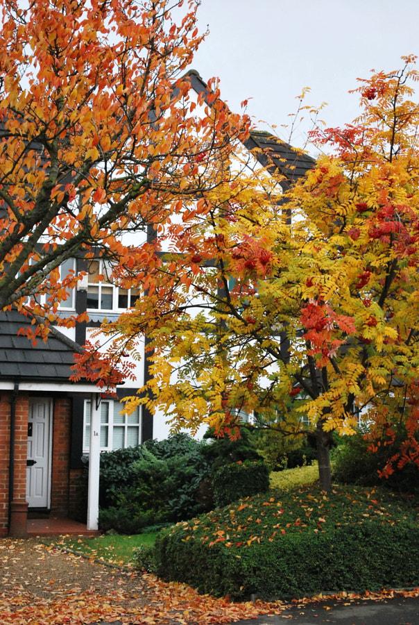 Autumn Leaves, UK by Sandra on 500px.com