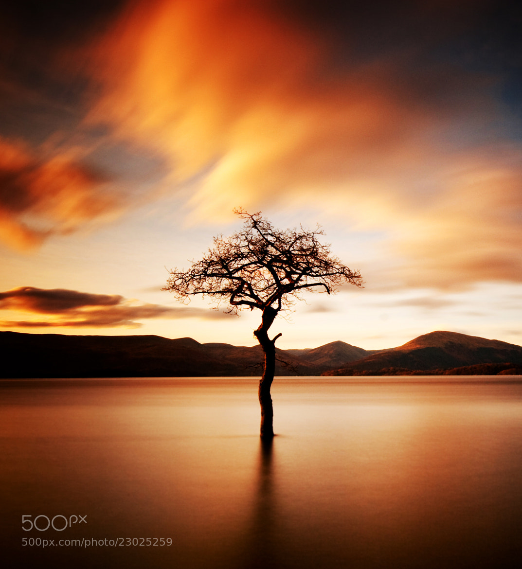 """Photograph """"That Tree"""" at Milarrochy by Stewart  H on 500px"""