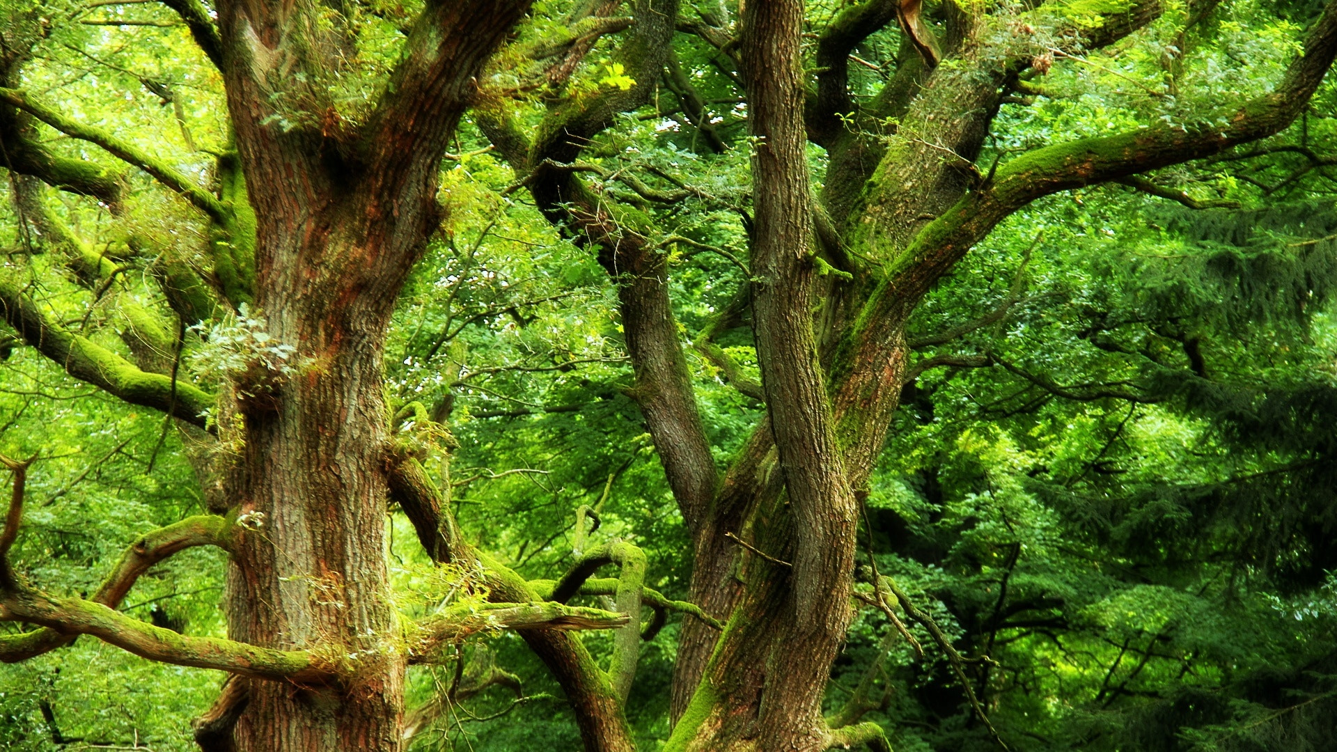 Photograph Deep Green, Deep Forrest by Unknown Drummer on 500px