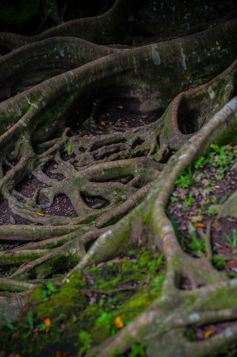 Photograph Roots by GophObservation  on 500px