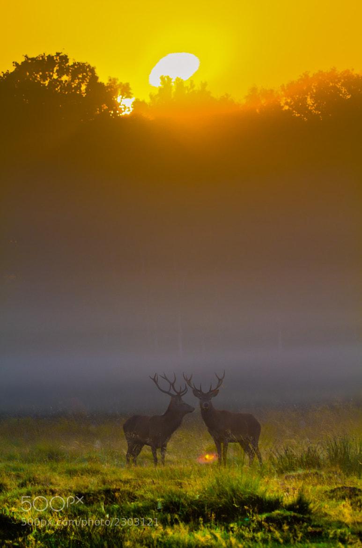 Photograph Deer Sunrise by Steve Bryson on 500px