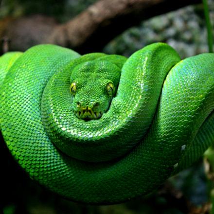 Green silent