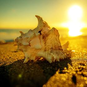 Travel Photography: seashell 2 by greg sagayadoro