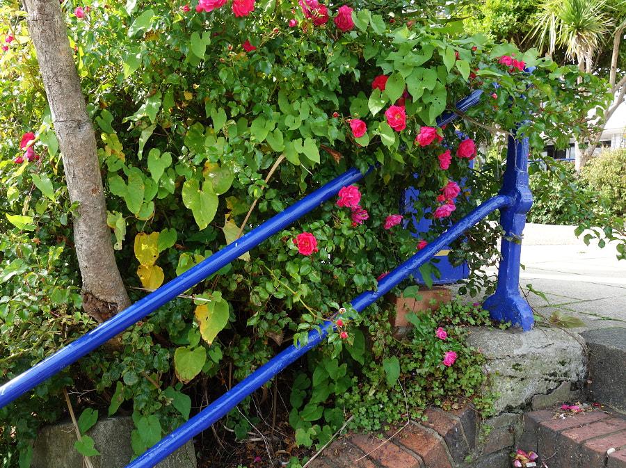 Dark Blue by Sandra on 500px.com