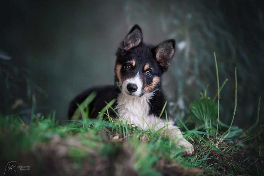 puppy Finn by Marina Reiter on 500px.com