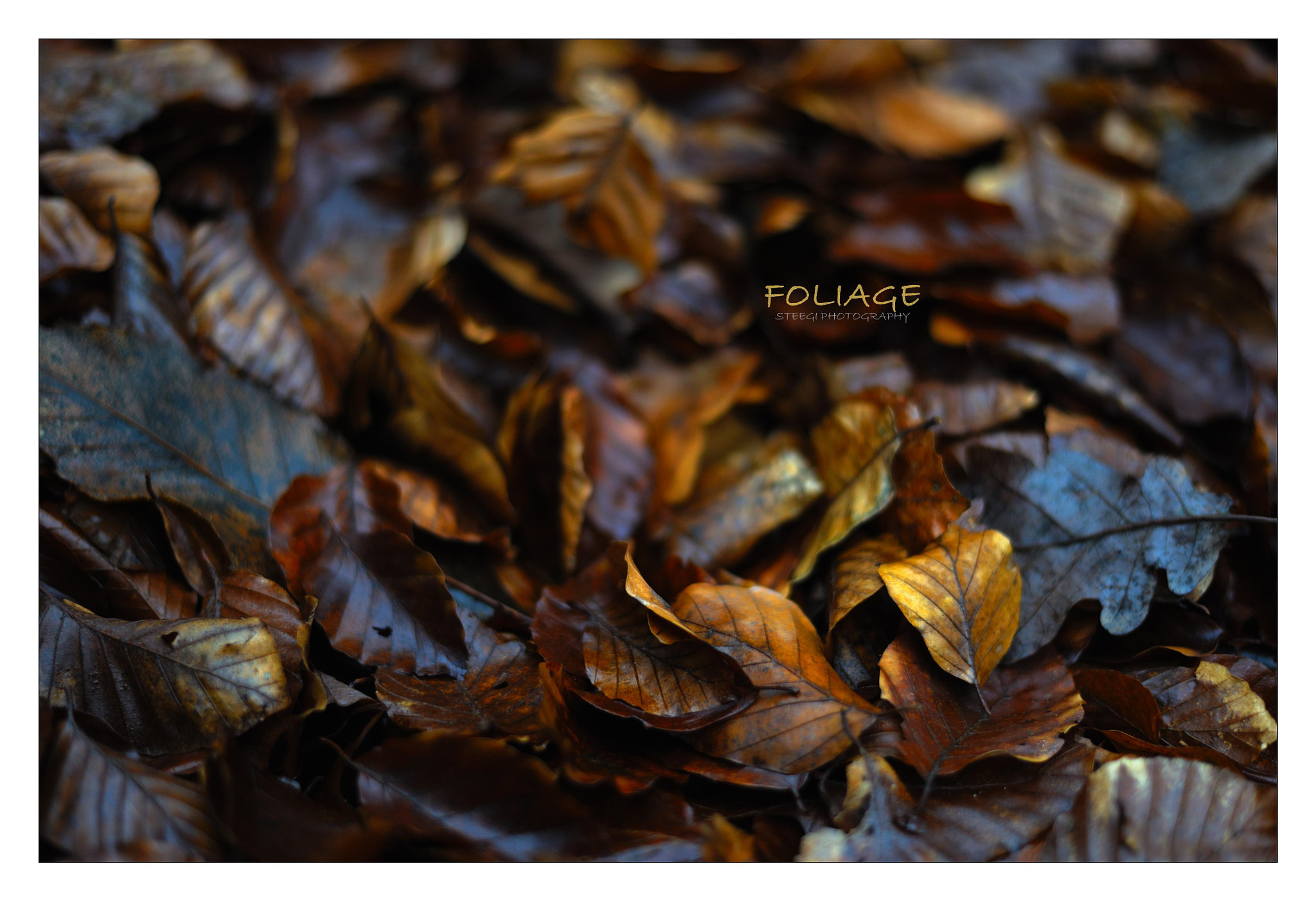 Photograph Foliage by Andreas Steegmann on 500px