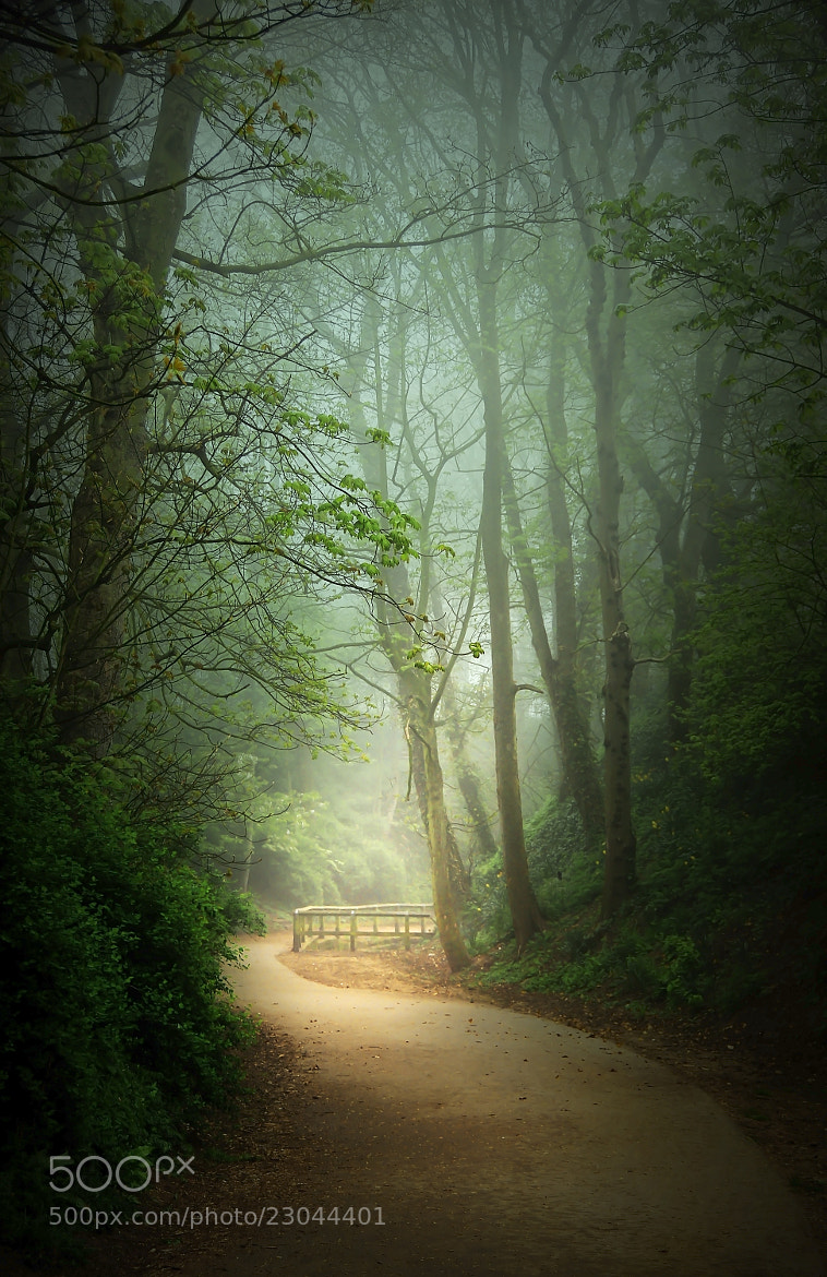 Photograph Along the Path by Svetlana Sewell on 500px