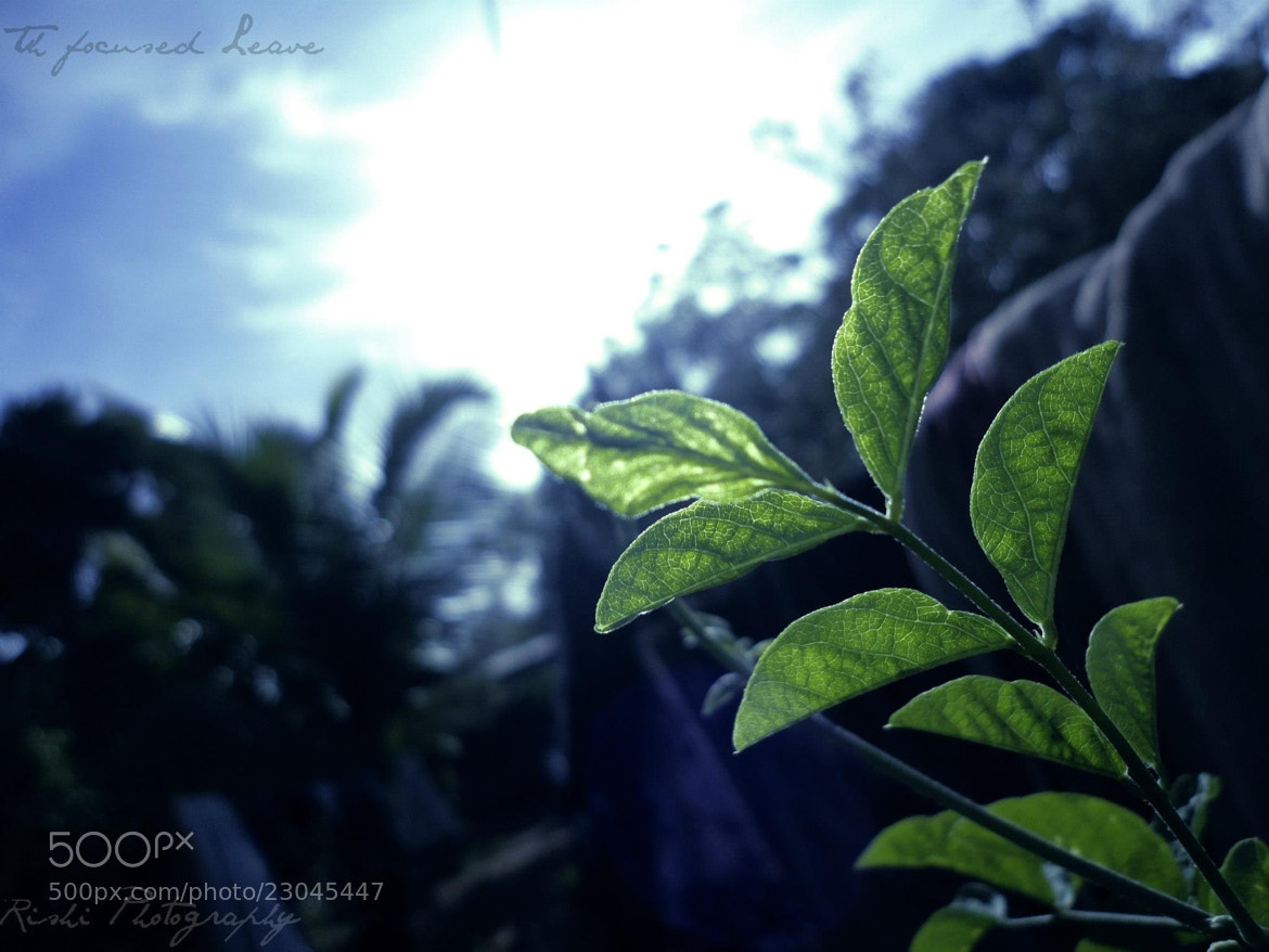 Photograph Pure Green by Rishikeshan Pangushan on 500px