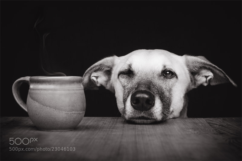 Dog photography - Photograph Need a coffee? by Elke Vogelsang on 500px