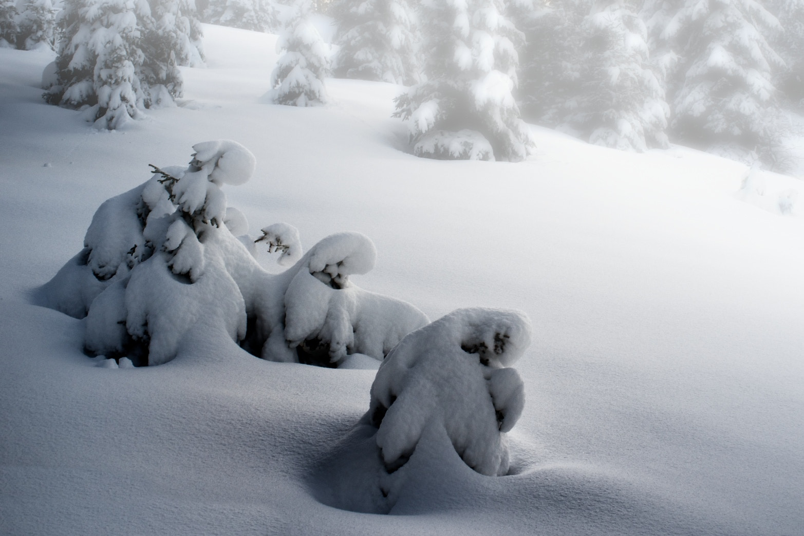 Photograph Snow creatures II by René Mederlet on 500px