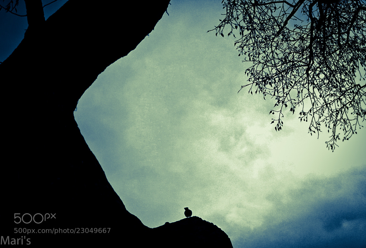 Photograph Lonely Bird & Tree by Mari Subramanian on 500px