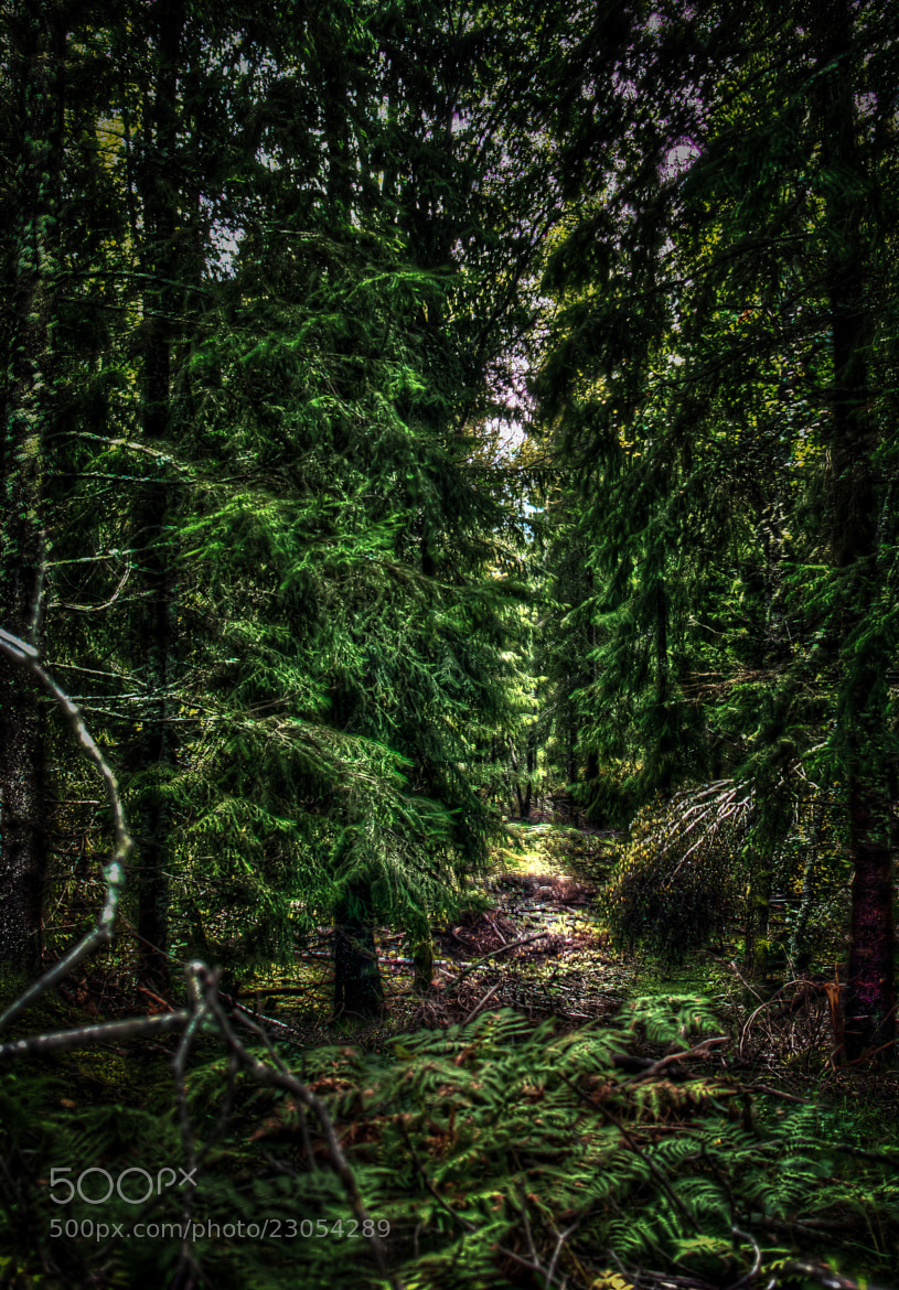 Photograph Mystery Forrest by Micke Levander on 500px