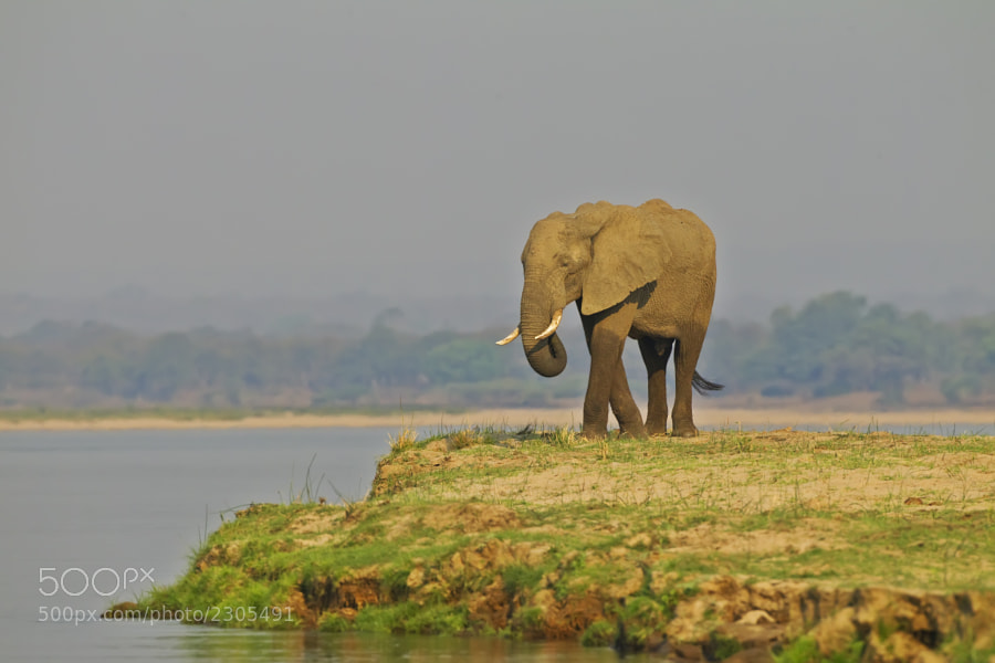 This fine Elephant posed nicely on the river bank, as we enjoyed our evening cruise. Taken in Chikwenya concession, Zimbabwe, 13th September 2011