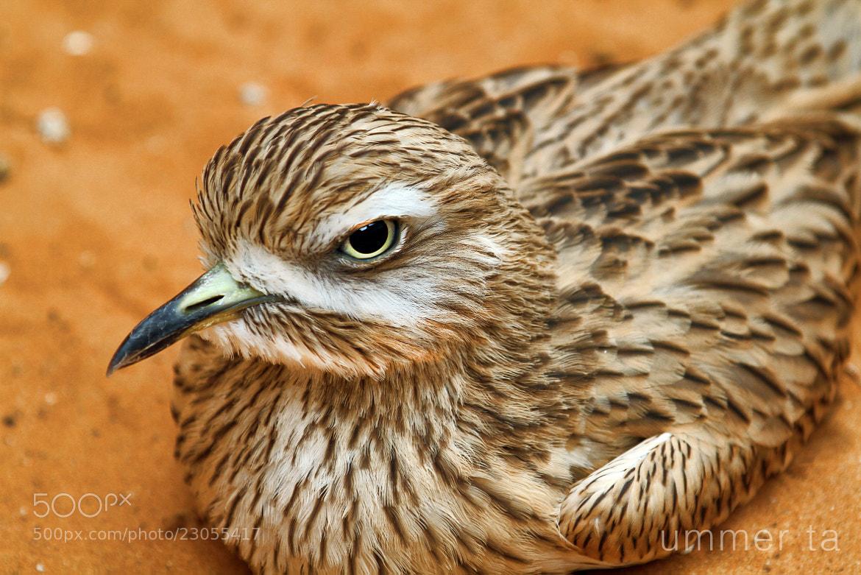 Photograph bird by Artist Ummer Ta  on 500px