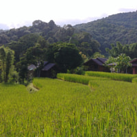 Home stay at Doi Inthanon rice terraces