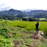 Rice terraces at Doi Inthanon