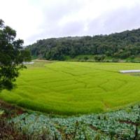 Farming in Chiangmai