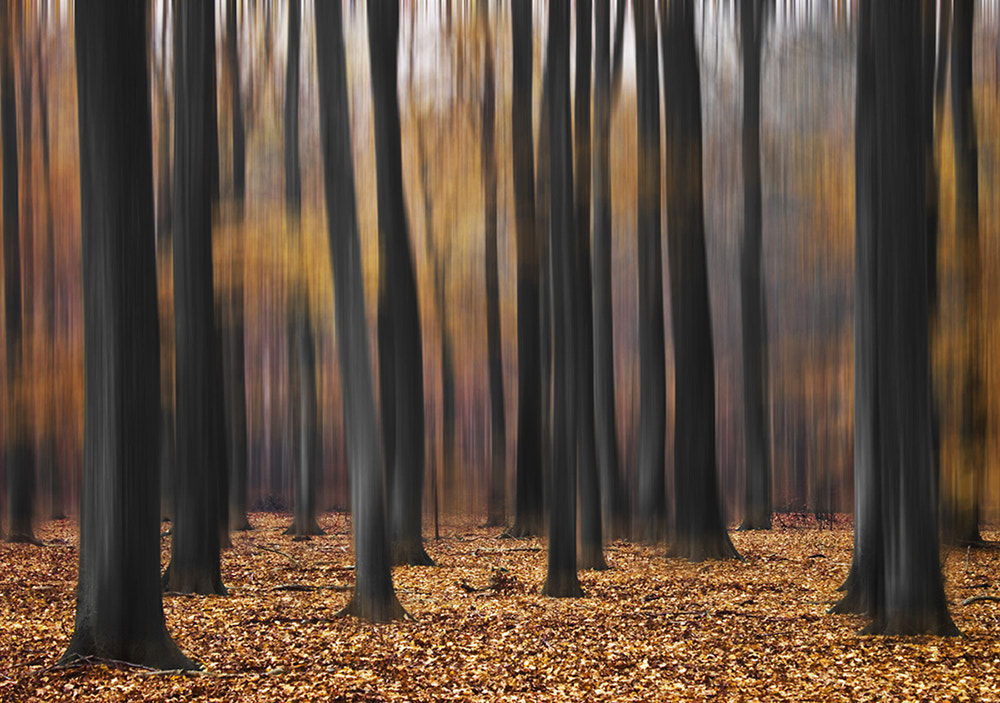 Photograph Mystic Wood by Carsten Meyerdierks on 500px