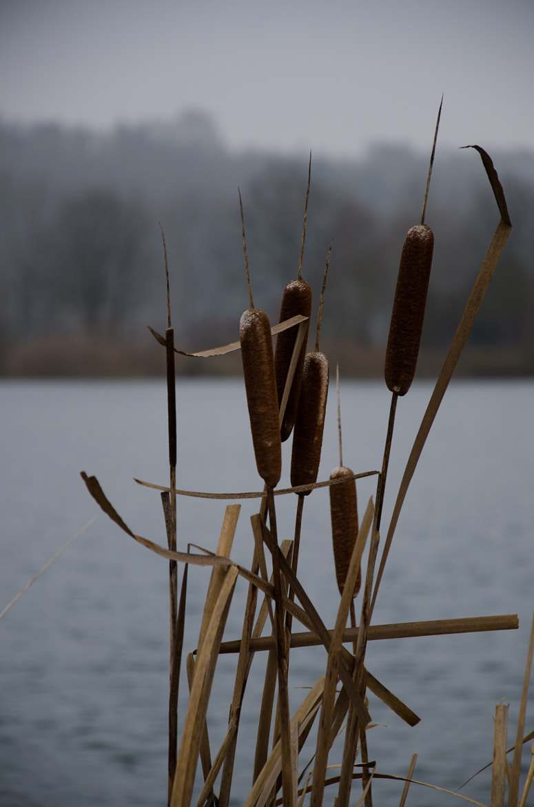 Photograph reed by Andy Vobiller on 500px