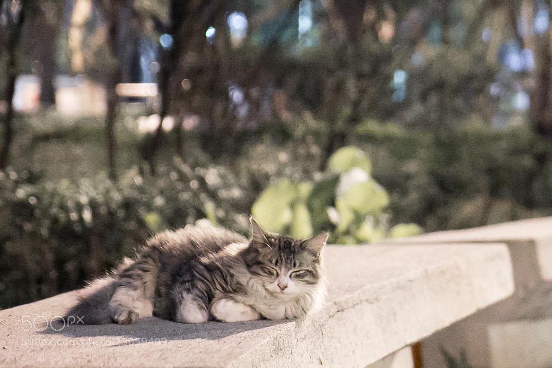 Photograph Sleeping Cat by Shang-hong Yu on 500px