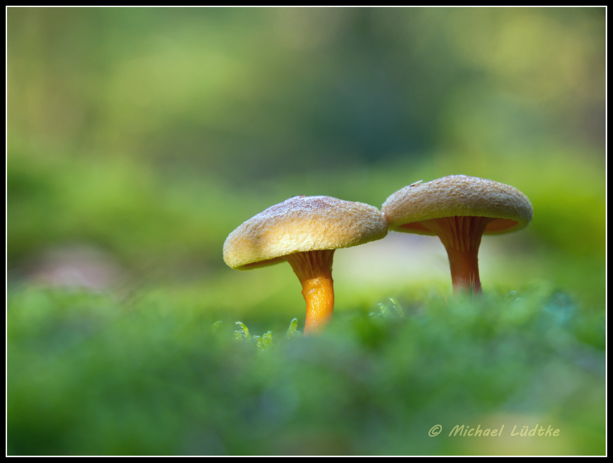 Photograph Mushrooms by Michael Lüdtke on 500px