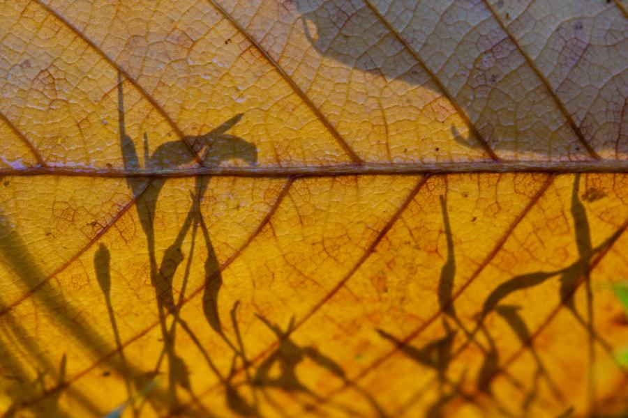 Ombres chinoises (shadow puppets) de Christine Druesne sur 500px.com