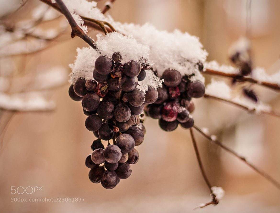 Photograph Ice Wine by NICOLAI BÖNIG on 500px