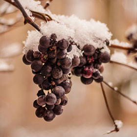 Ice Wine by Nicolai Bönig (Boenig)) on 500px.com