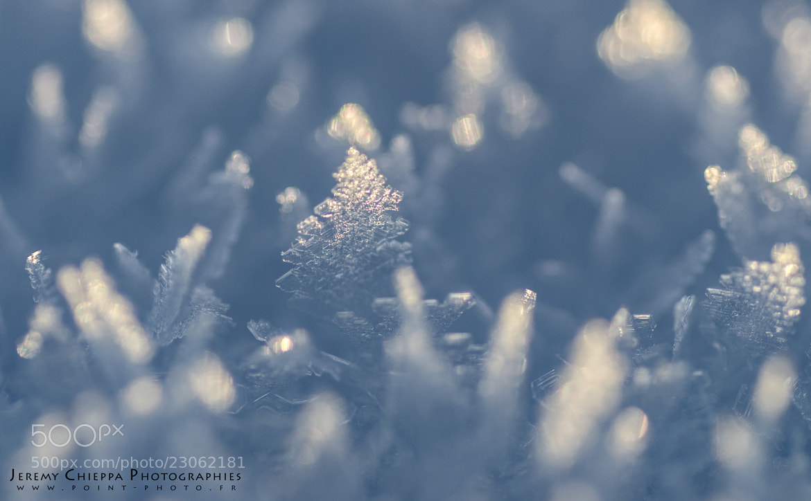 Photograph Snowflakes frozen by Jeremy Chieppa on 500px