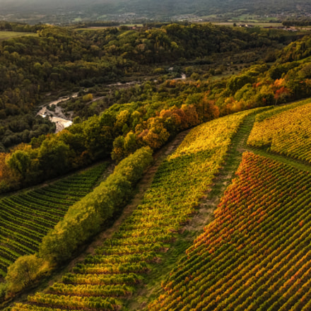 Drone photo - Vinyard in fall