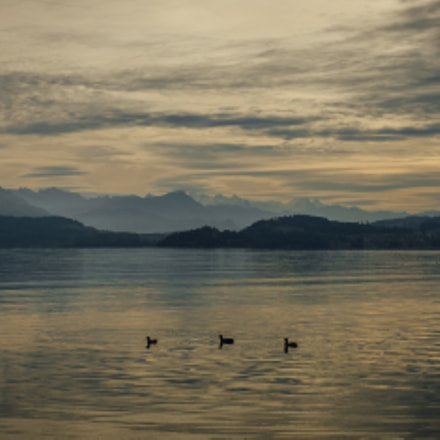 Evening at the lake of Zug