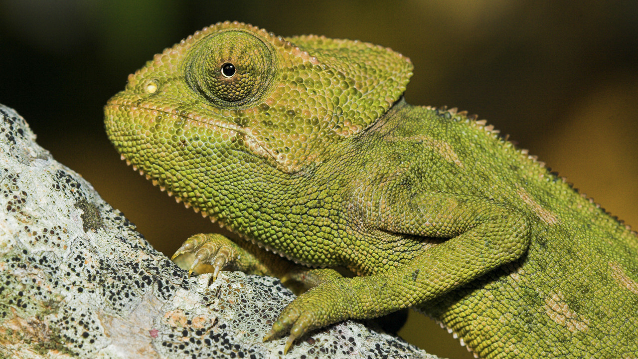Photograph Chameleon by Javier Abad on 500px