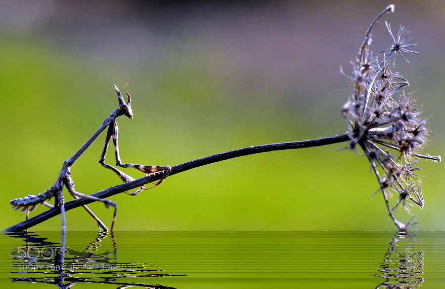 Photograph help me by yilmaz uslu on 500px