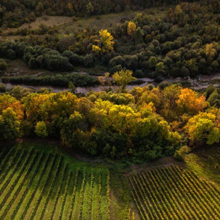 Vineyard border