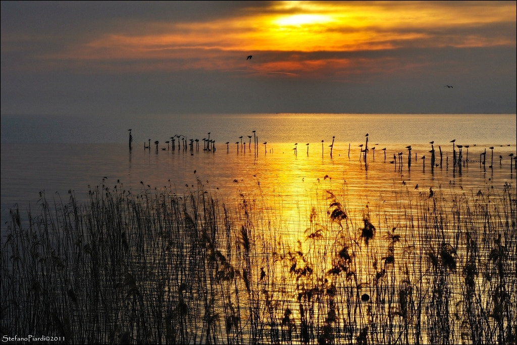 Photograph golden lake by Stefano Piardi on 500px