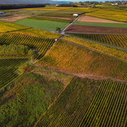 Vineyard from the sky