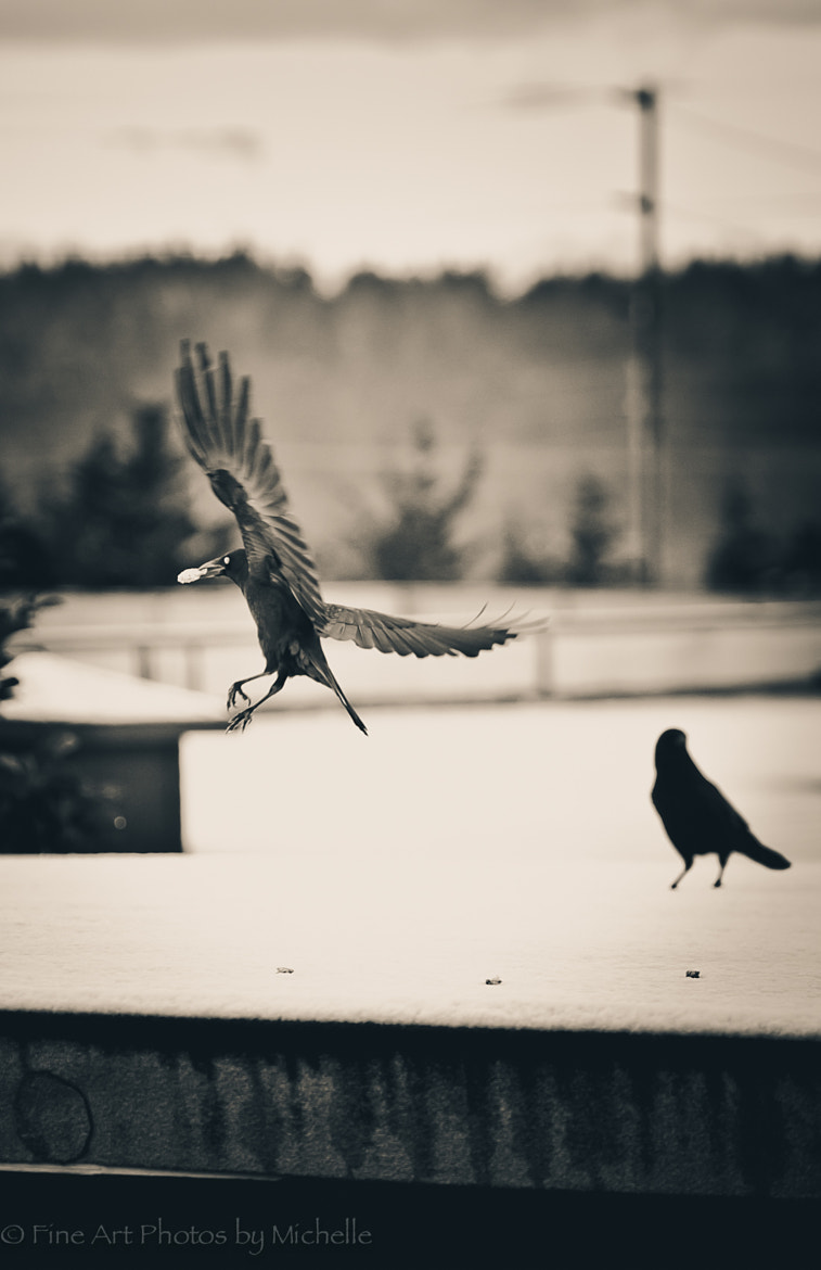 Photograph Eating Crow by Michelle Stevenson on 500px