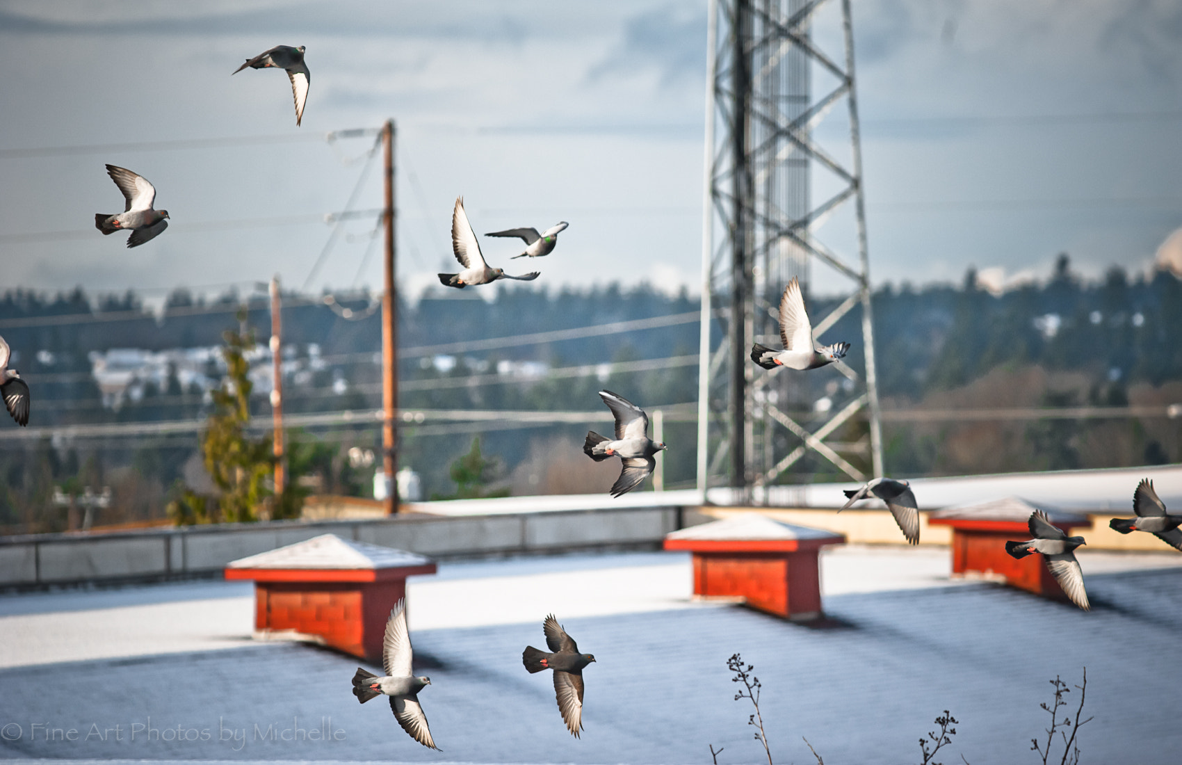 Photograph Pigeon Flight by Michelle Stevenson on 500px