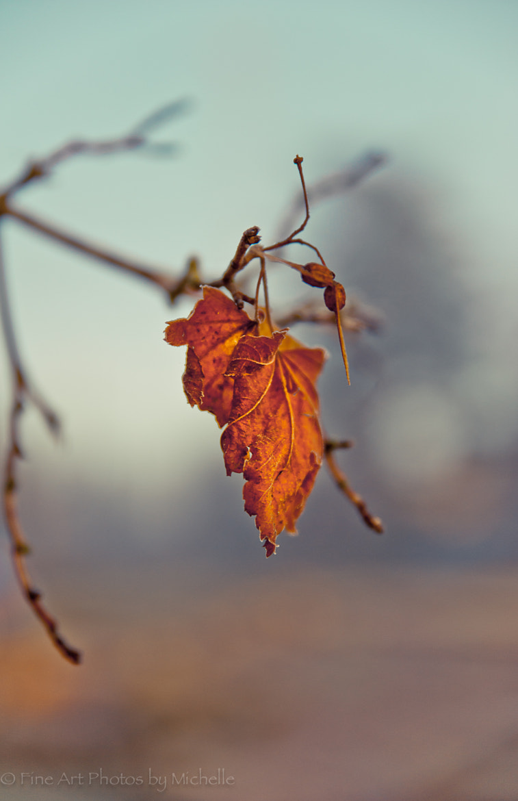 Photograph Last Lingering Leaf by Michelle Stevenson on 500px